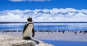 Najlepsze Ciekawostki oraz Informacje o Antarktydzie dla dzieci