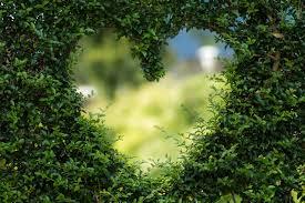 zdjęcia Serce przyroda szablon kartkę z życzeniami krzewy