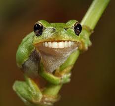 Świat miłośników żab - strona miłośników żab