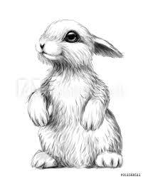 Obraz Królik. Szkic, artystyczny, graficzny obraz królika na białym tle.  Naklejka na ścianę. na wymiar - głowa, artystyczny, ładny