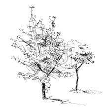 Szkic dwóch drzew. ilustracji wektorowych • drzewny, goły, sosna |  myloview.pl